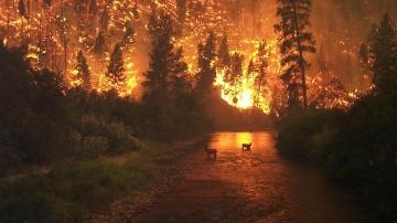 Un gran incendio afectando un bosque