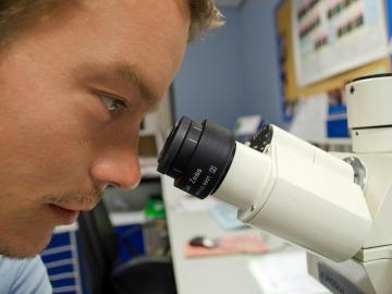 Un científico mira en un microscopio