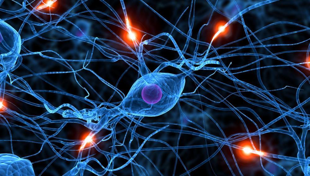 Resultado de imagen de Conexiones del cerebro