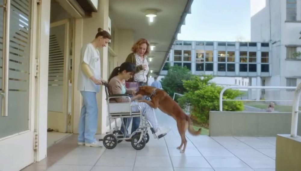 'El hombre y el perro, un emotivo corto que promueve la donación de órganos