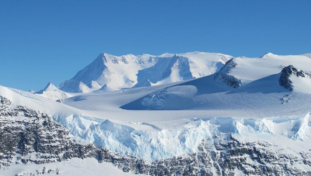 Una planta de la Antártida, mecanismo de defensa contra los rayos solares
