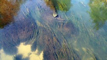 El desinfectante más común en muchos productos cosméticos es tóxico para las algas acuáticas