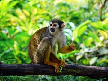 El Congreso pide al Gobierno prohibir el comercio y la tenencia de primates
