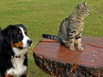 Las protectoras recogieron 104.000 perros y 33.000 gatos abandonados en 2016