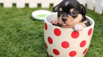 Consejos para educar a tus cachorros