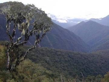 Identifican un nuevo género de árbol en los Andes tropicales
