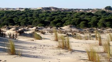 Reforestación de Doñana