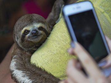 ¿Qué efectos negativos tienen los selfies para los animales?