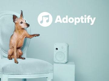 'Adoptify', una iniciativa que promueve las adopciones de perros a través de la música