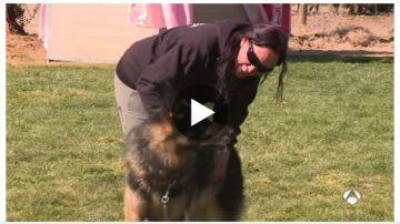 Tango, el perro adiestrado para proteger a África de su agresor