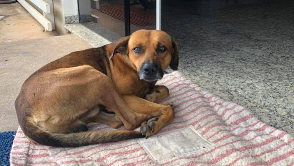 Un perro se niega a abandonar el hospital donde su dueño falleció