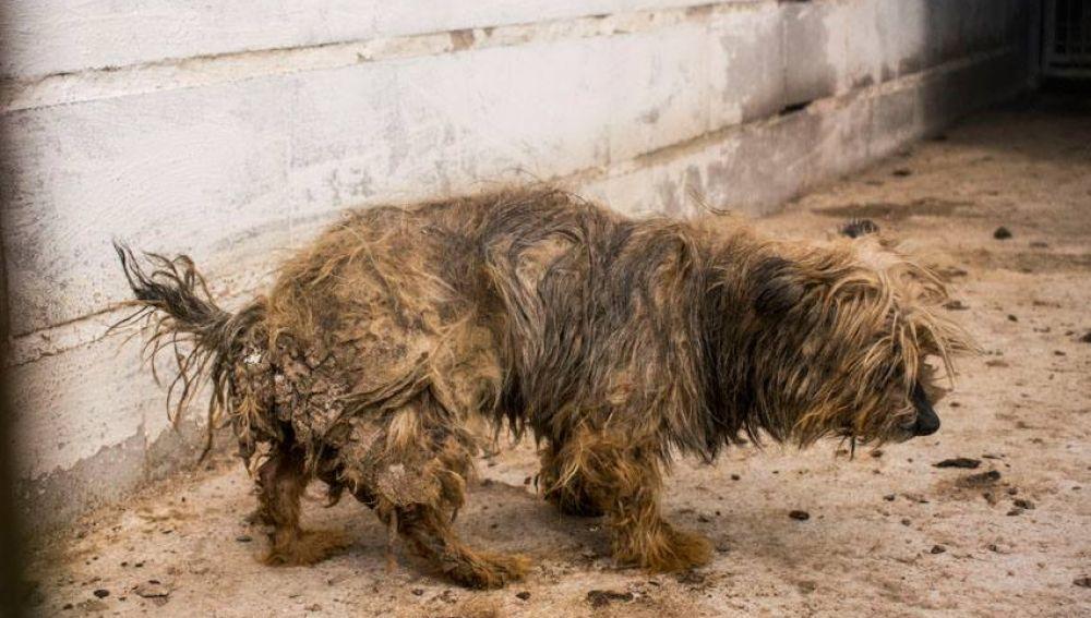 Animalistas denuncian un criadero de animales en Tres Cantos por maltrato