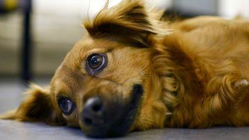 Más de 138.000 perros y gatos fueron abandonados en España en 2017
