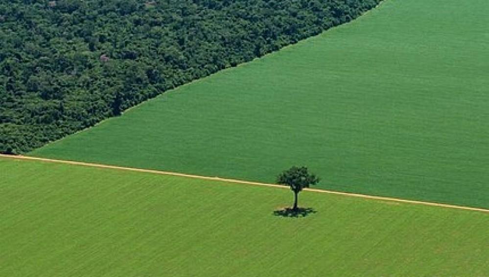 Bosque Primario