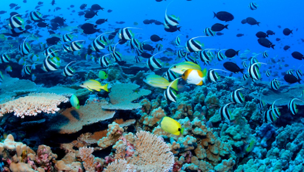 el fondo marino del mar mediterrneo