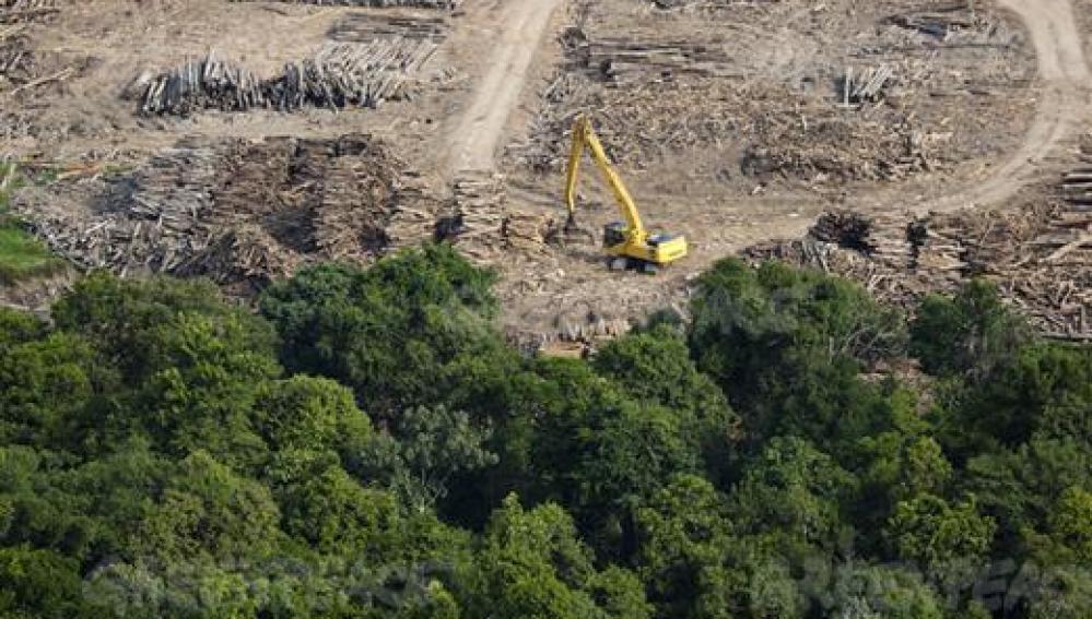 HAZTE ECO | La tala de árboles provoca una deforestación ...