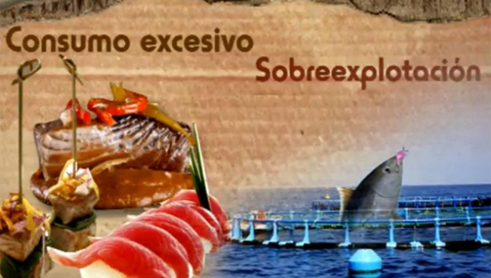 Informativo Hazte Eco: Atún rojo