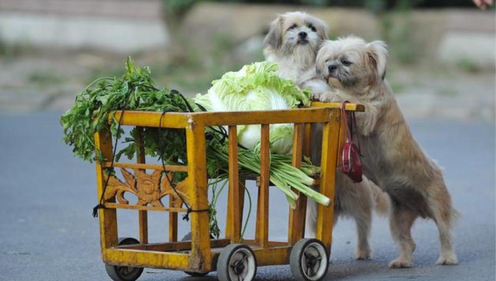 Perros ¿alimento en China?