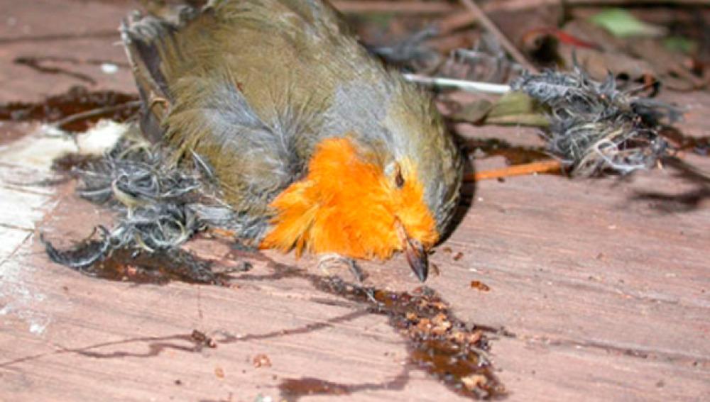 Un ave muerta por el pegamento