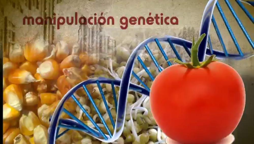 Resultado de imagen de agricultura transgenica