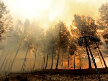 El fuego afecta una zona de pinos