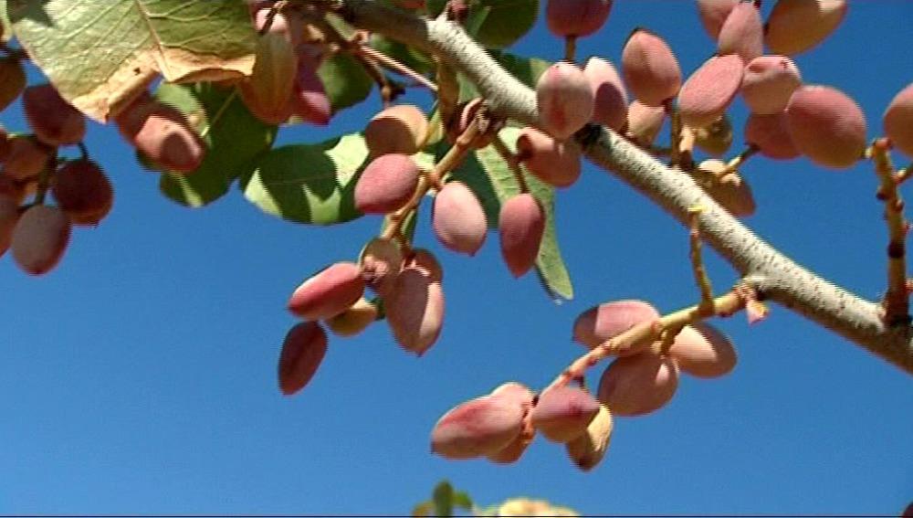 El pistacho es antiestresante y antioxidante