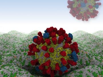 Investigadores han conseguido simular en un ordenador el virus de la gripe