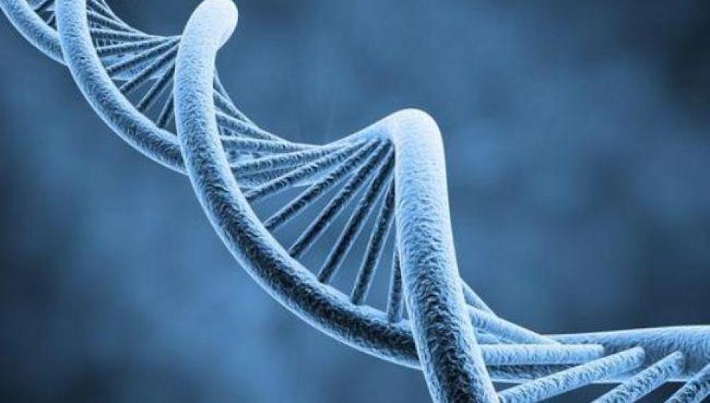 Descubren un nuevo mecanismo para reparar el ADN