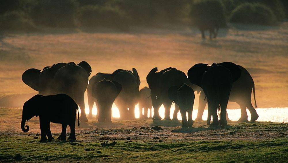 Video de la lista de elefantes amateur clip