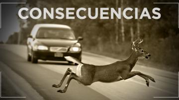 Consecuencias de los accidentes con animales