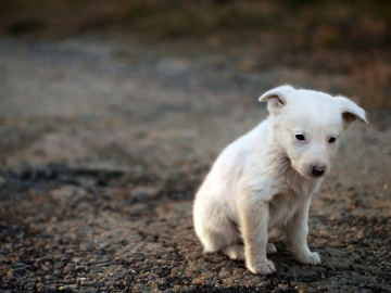 Imagen de un perro