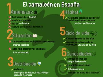 Las amenazas del camaleón en España