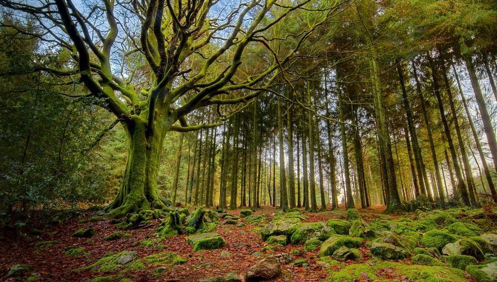 El bosque mágico de Broceliande, Bretaña