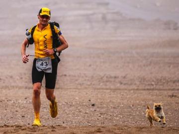 Gobi, la perrita callejera que corrió una carrera de 250 kilómetros junto a un atleta