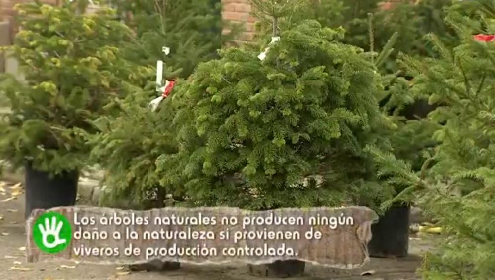 como cada ao el colegio de ingenieros de montes promueve la compra de rboles de navidad naturales antonio maroto alumno de la escuela tcnica superior