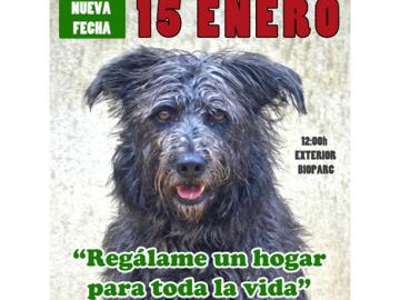 Valencia celebra su desfile anual de perros abandonados