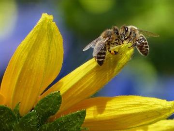 Crean la primera abeja robot capaz de polinizar de forma artificial