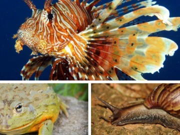 Sacrifican a los 40 animales marinos que incautaron en un centro comercial