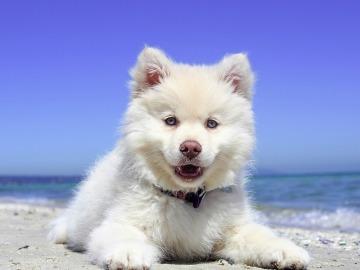 Marbella estrenará en verano dos playas para perros