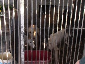 Rescatan 42 perros hacinados y en estado de abandono en una perrera ilegal de Cádiz