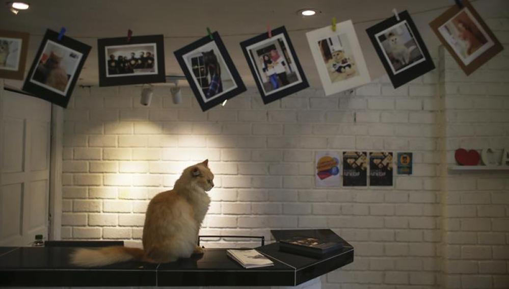 Hoteles de cinco estrellas para gatos en Malasia