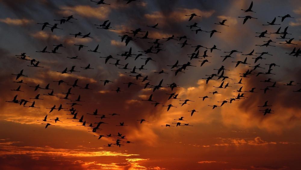 El cambio climático afecta a las poblaciones de las distintas especies