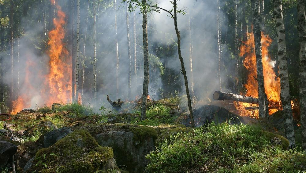 Prevenir los incendios