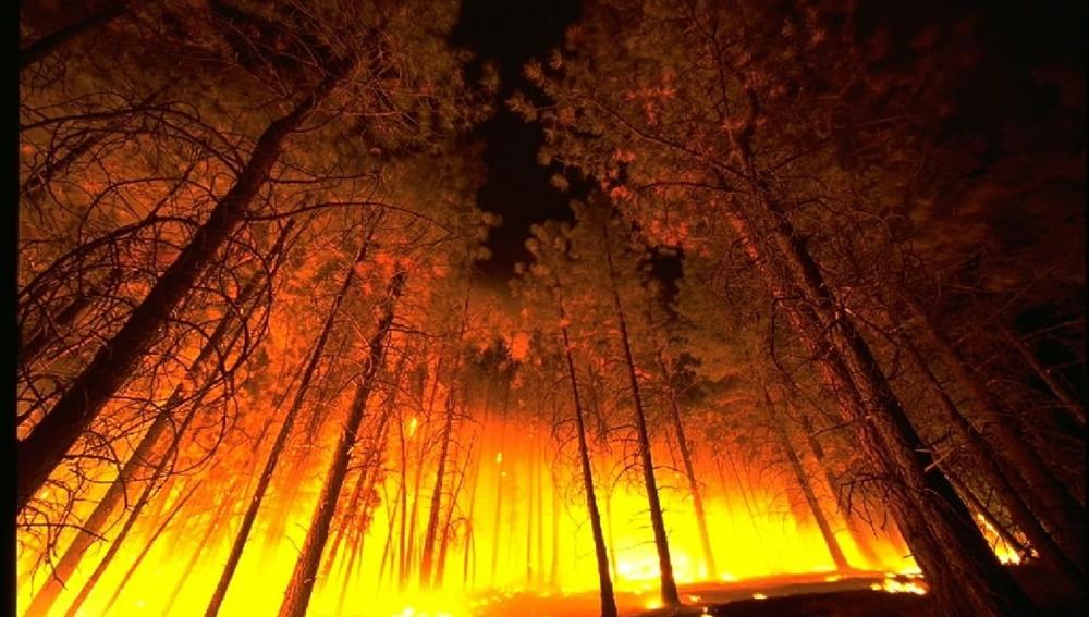 El fuego arrasa en enero de 2017 más del doble de hectáreas que la media del decenio