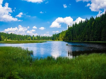 Cinco beneficios de la energía de los bosques para el Planeta