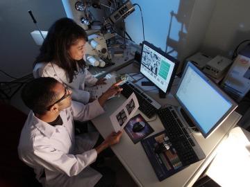 Investigadores desarrollan un programa informático que detecta y localiza el cáncer