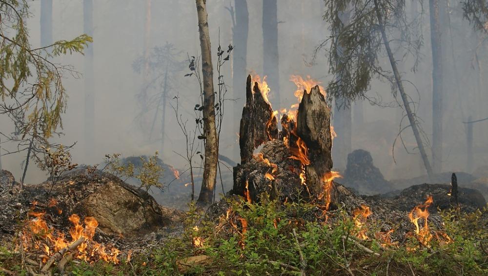 Asturias sufre 254 incendios forestales en los últimos días