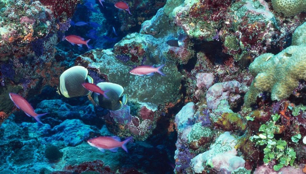 Los corales del Caribe contienen compuestos para combatir enfermedades como el VIH