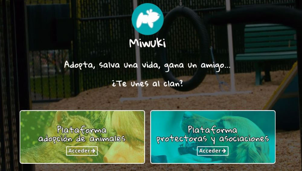 'Miwuki', una plataforma para adoptar animales que necesitan un nuevo hogar