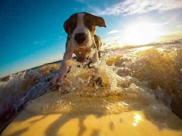 Perro en el mar